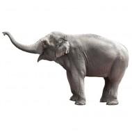 KEK Amsterdam Wandsticker Safari Friends Elefant 58cm